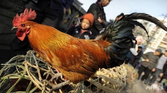 china-chicken