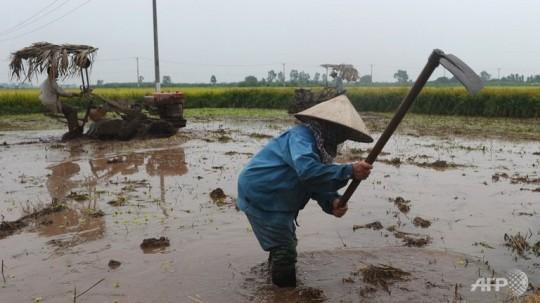 farmers-prepare-land-for