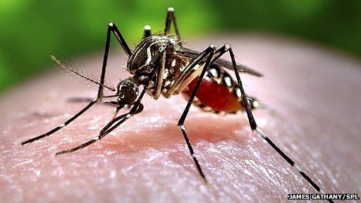 _71372768_c0093043-feeding_mosquito-spl3932005