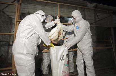 H7N9_reuter