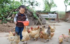 boy_feeding_chickens
