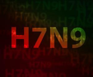 h7n9_words